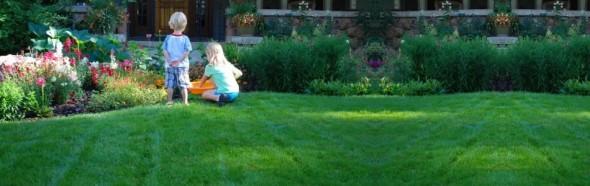 organic lawn care San Antonio