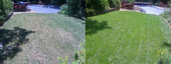 Alamo Heights organic lawn fertilization